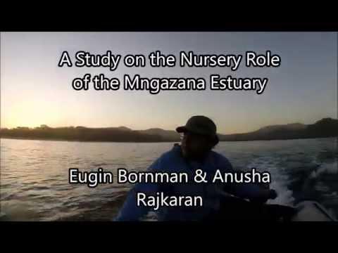 Nursery Function Research - Mngazana Estuary