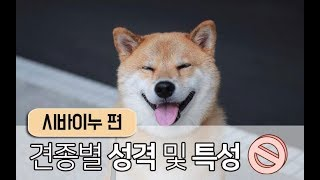 [강아지 소개] 시바견,시바 이누에 대한 모든 것!
