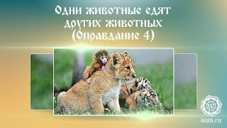 Одни животные едят других животных (Оправдание 4)