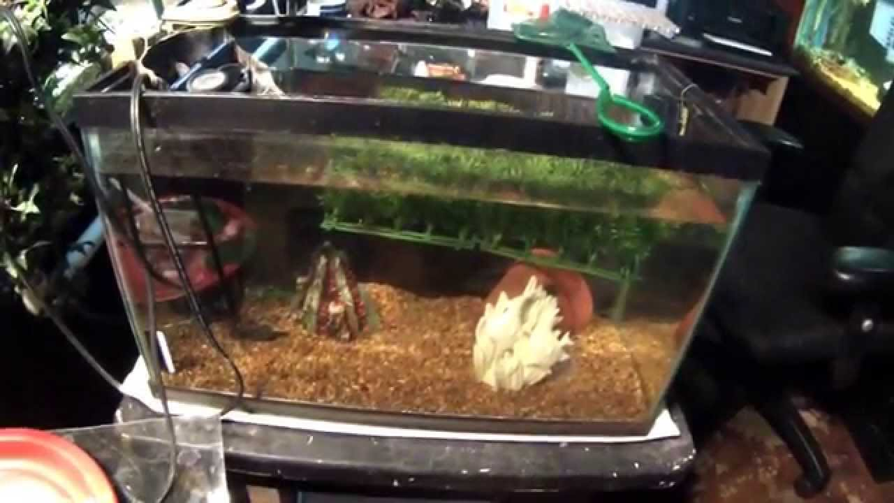 Man Cave With Tank : Man cave and my fish room at the end 2014 youtube