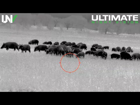 Is Thermal Hunting Effective for Controlling Feral Hogs?