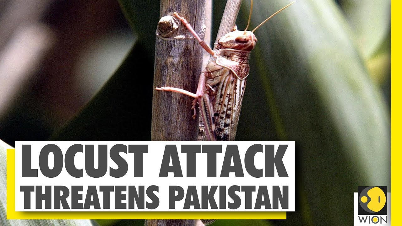 Your Story: Pakistan declares emergency over Locust Outbreak | WION News | World News