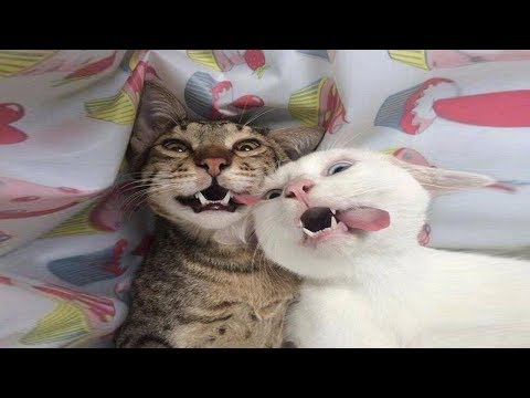 Funniest Cats 😹 - Don't try to hold back Laughter 😂