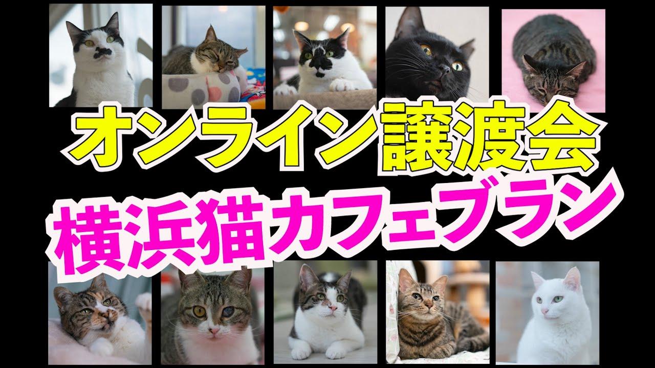 横浜 猫 里親