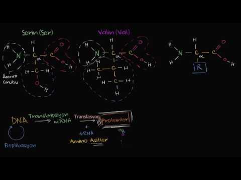 Amino Asitler (Biyoloji / Makromoleküler)