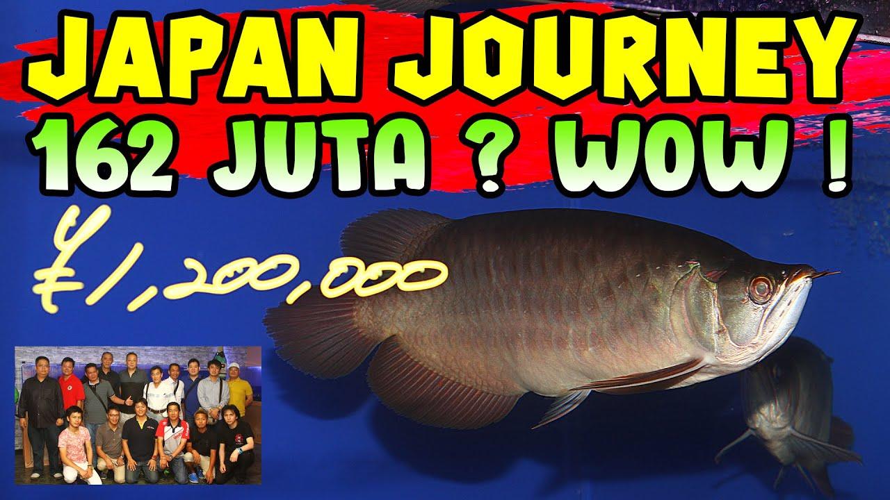 Perjalanan ke Jepang dengan boss2 arwana dari Indonesia. Ngomong2 ngapaen ke Jepang ya rame2 ?