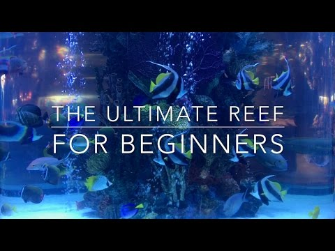 The Ultimate Nano Reef For Beginners!