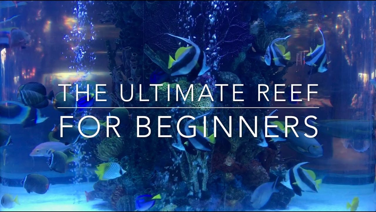 the ultimate nano reef for beginners youtube