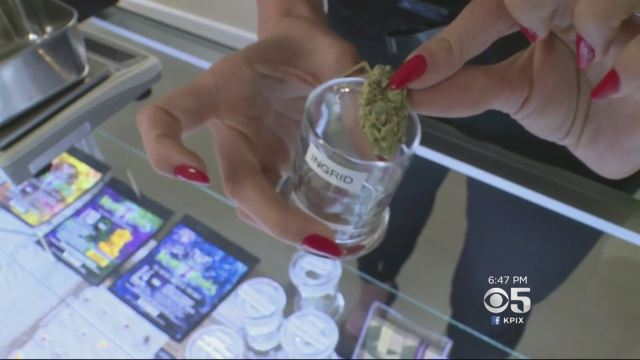 Nations First Budtender Certified In Sacramento Youtube