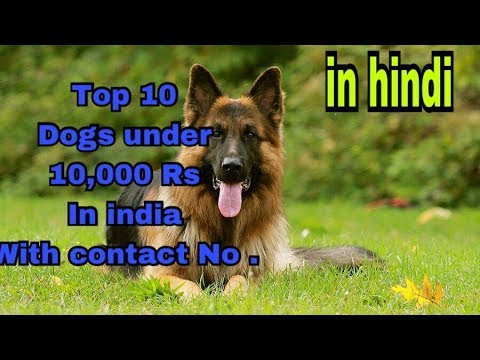 Top 10 dogs under 10,000 Rs in india with Contact No. || price in india || .