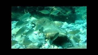 snorkeling in cala san vicent mallorca