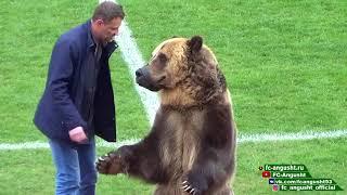 медведь на матче в Пятигорске