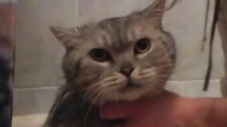 кот смешно орёт в ванне! смотреть всем! смешно до слез!