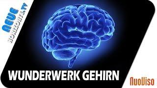(0.71 MB) Das Gehirn – Wunderwerk der Selbstheilung – Dr. Ulrich Werth Mp3