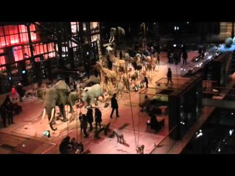 Natural History Museum in Paris - Grand Gallery of Evolution (1/2)