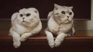 Funny Cats Compilation  Funny Cat Videos Ever Part BABYPETS