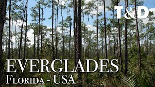 Everglades National Park - Florida - Wild Life in USA - Travel & Discover