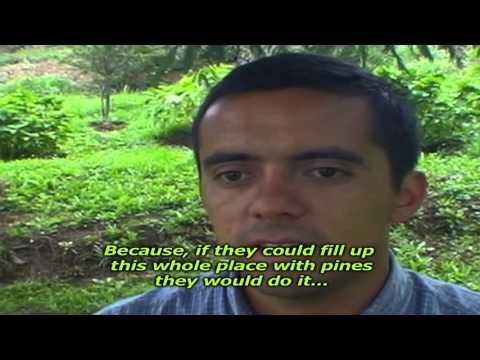 Mapuche People and the forest invasion