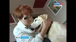 Вести-Хабаровск. Увеличение денежной компенсации для собак-поводырей