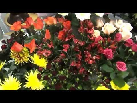 """Асплениум. """"Нескучный сад Новоуральск"""".из YouTube · С высокой четкостью · Длительность: 2 мин21 с  · Просмотры: более 2.000 · отправлено: 24.01.2013 · кем отправлено: нескучный сад новоуральск"""