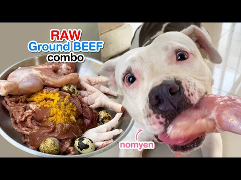 nomyen-the-pit-bull-eats-ground-beef-combo-[asmr]-|-b.a.r.f-diet-|-mukbang-犬が生の肉を食べる-|-4k