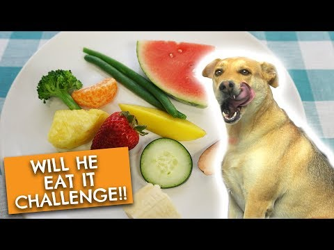 CUTE Dog MUKBANG!! | Labrador Sharpei Tries Fruits and Vegetables | Will He Eat It Challenge!