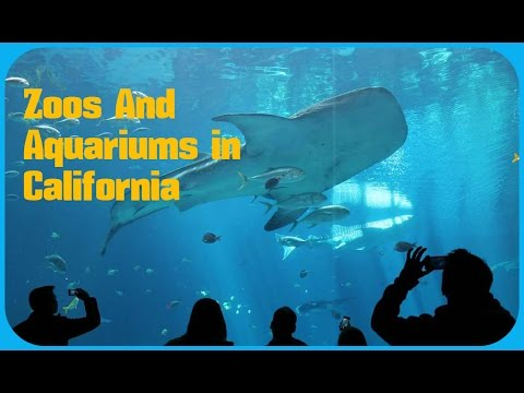 Top 20. Best Zoos And Aquariums in California