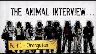 The Animal Interview Pt. 1 -Orangutan