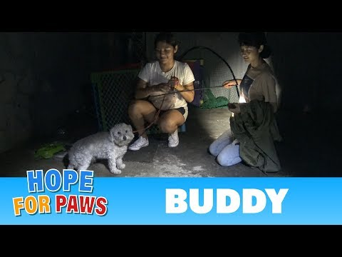 download Hope For Paws fans joined me on a late night rescue to save a scared homeless maltipoo.