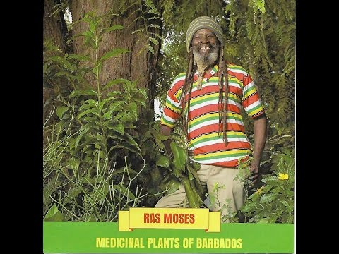 Ras Moses - Medicinal Plants of Barbados