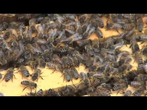 Michael Palmer   Inspecting a Hive