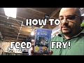 How to Feed Guppy Fish Fry Feeding Frozen Cyclops How to make fry food
