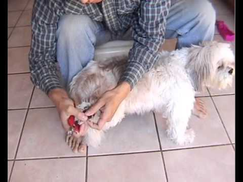 How To Trim Dog Nails An Easy Way
