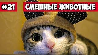 Кот в костюме смешные животные | Bazuzu Video ТОП подборка июнь 2017