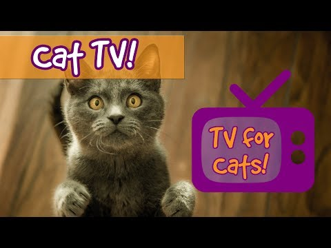 Videos for Cats to Watch! Fun Nature Footage for Cats with Relaxing Music, Birds, Fish, Lizards!🐈📺