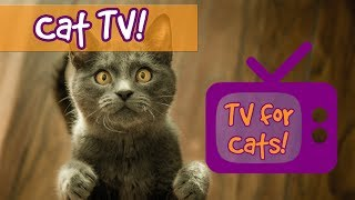 Videos for Cats to Watch! Fun Nature Footage for Cats with Relaxing Music, Birds, Fish, Lizards!🐈📺 thumbnail