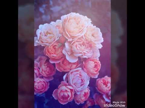 Букеты алых и красных роз, картинки круглых букетов с розами