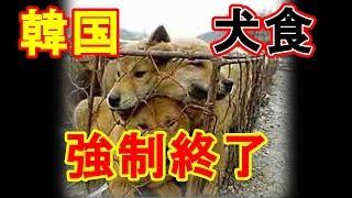 韓国の犬食文化に変化!養犬ビジネスの実は明るい未来!?【噂の〇〇マ...