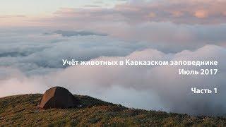 Учет животных в Кавказском заповеднике. Июль 2017. Часть 1.