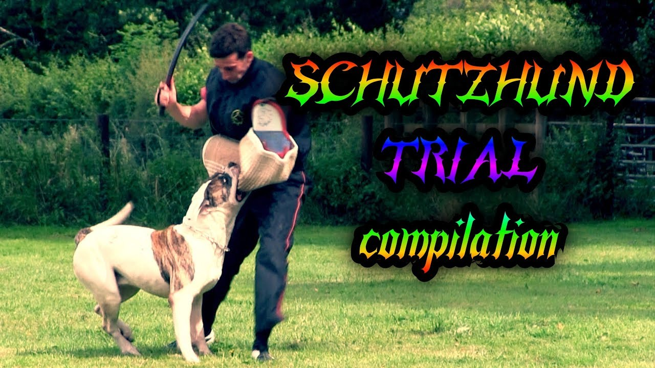 Cerberus ipo & schutzhund club