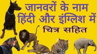 जानवरों के नाम हिन्दी और इंगलिश में।