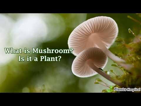 5+ Wonderful Health Benefits Of Medicinal Mushrooms: Types & Uses