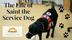 The Life of Saint the Service Dog | Mobility Service Dog Documentary