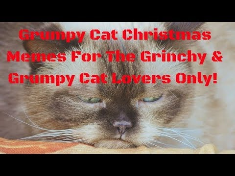 Grumpy Cat Christmas Memes For The Grinchy & Grumpy Cat Lovers Only!