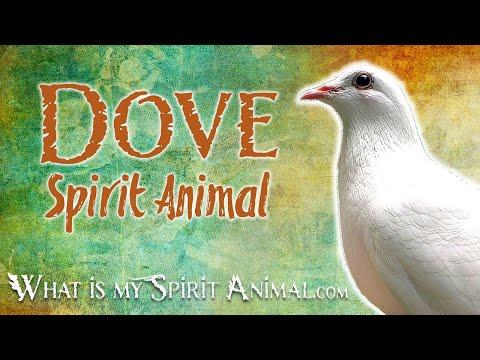 dove-spirit-animal-|-dove-totem-&-power-animal-|-dove-symbolism-&-meanings