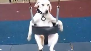 シュール映像ww犬のテーマパーク?ブランコに乗る犬の姿がシュールす...