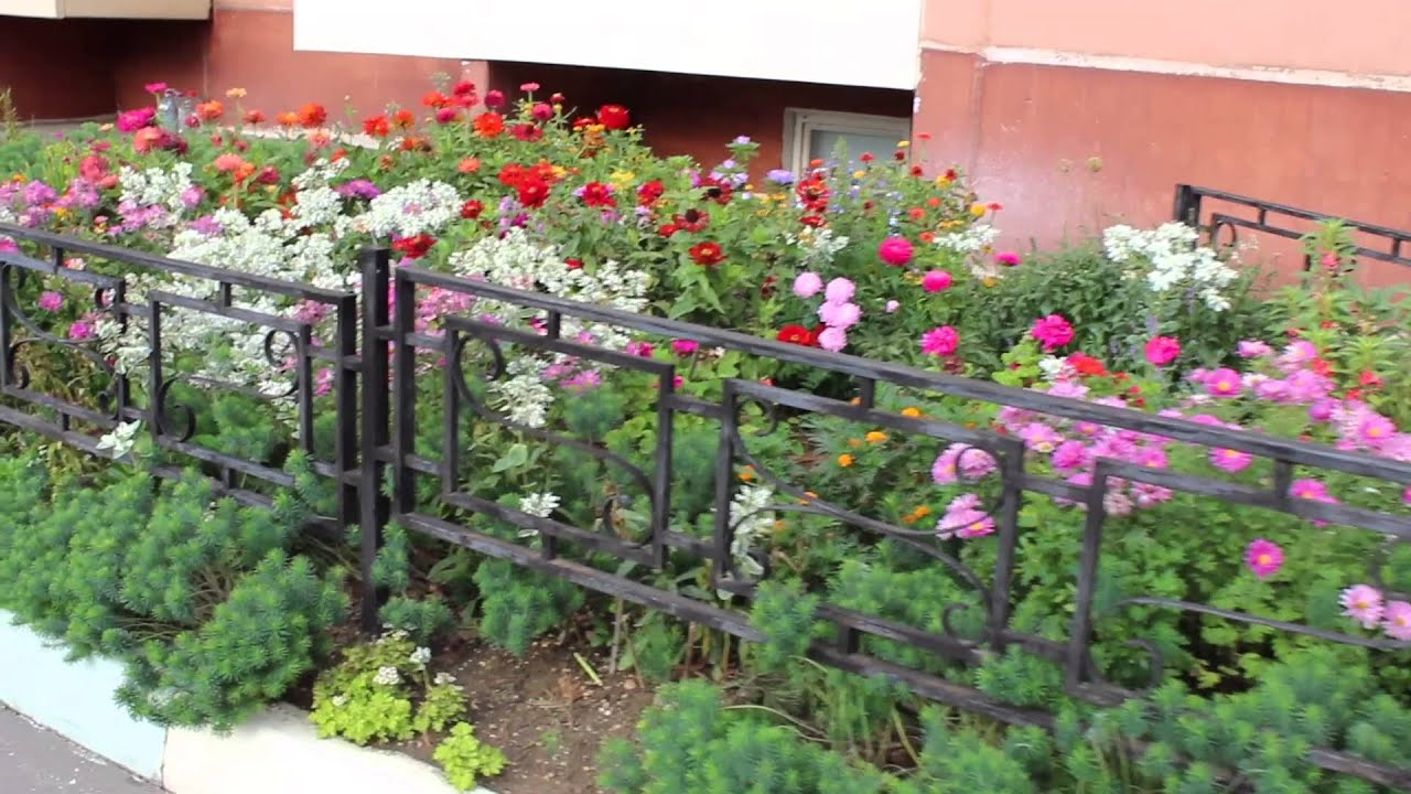 Красивый палисадник перед домом 50 фото идей
