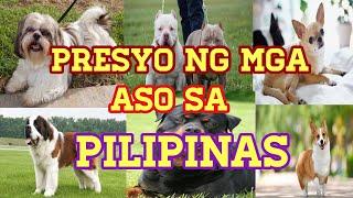 PRESYO NG MGA ASO SA PILIPINAS | DOGS PRICE LIST IN THE PHILIPPINES | DER DOGS