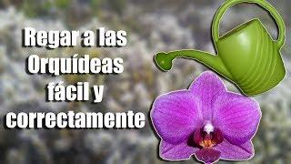 ¿Cómo se deben regar las Orquídeas correctamente?    Orquiplanet