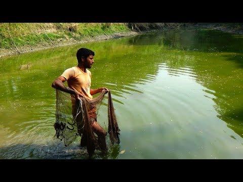 Throw net fishing | Catching Fish using Cast net | Net Fishing in the Village
